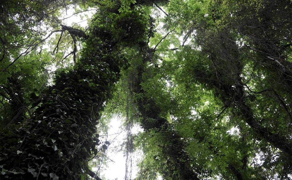 Сказки Самурского леса